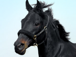 CONNECTICUT EQUINE THERAPY, LLC 2016-04-06 13-01-59